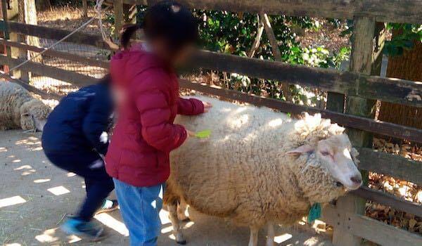智光山公園_羊