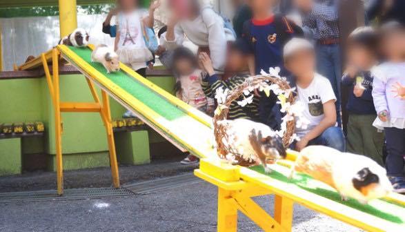 智光山公園_こども動物園_ふれあい