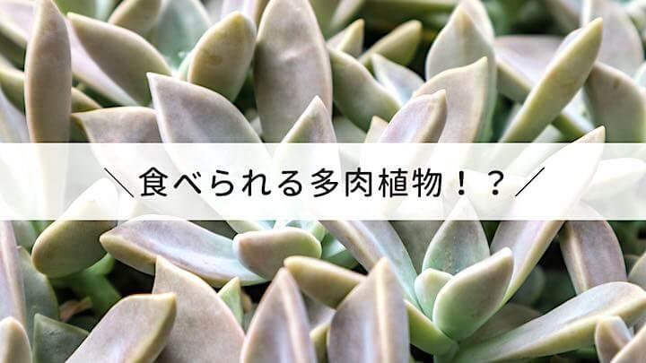 食べられる多肉植物