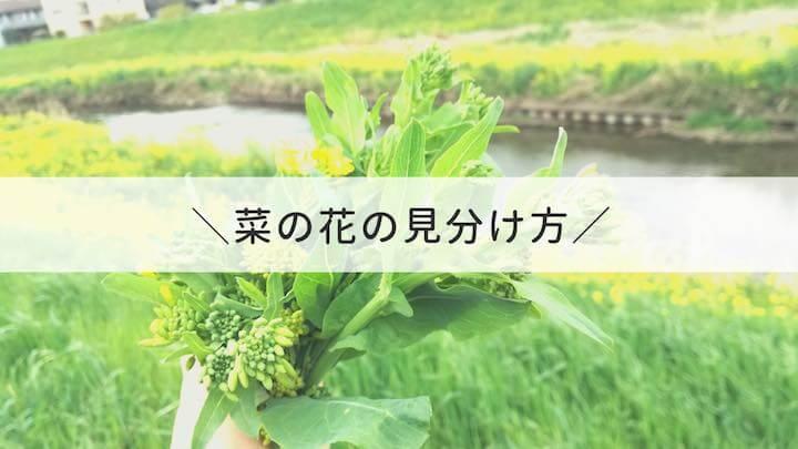 菜の花_見分け方
