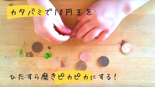 カタバミ_10円玉