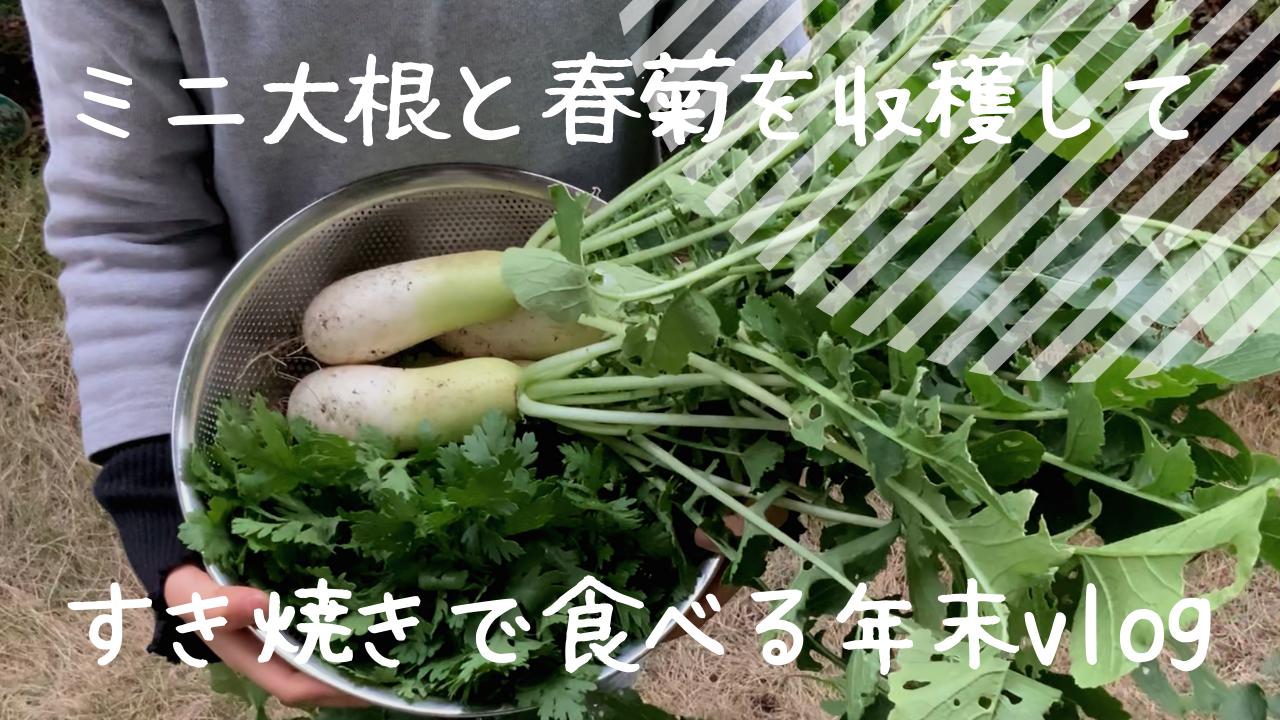 家庭菜園_大根