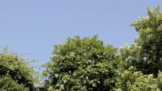 隣の家の木